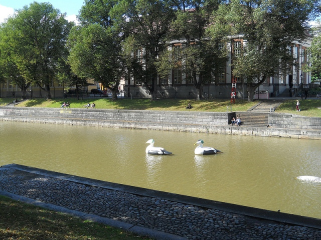 ducks in Turku